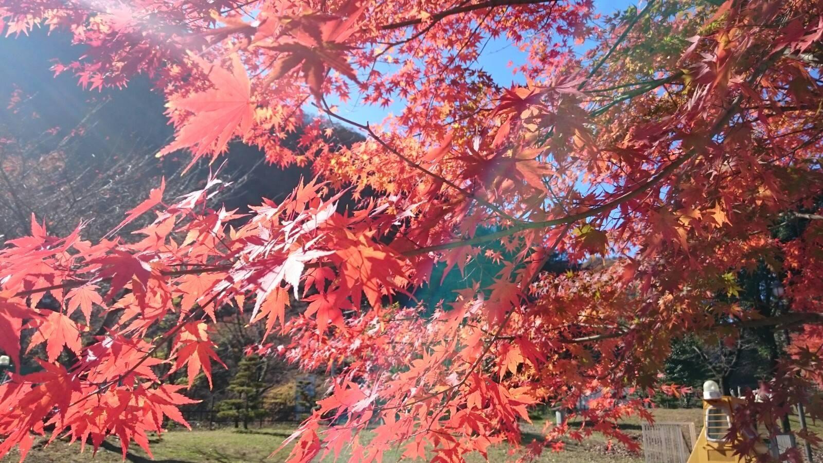 Fall in Karuizawa
